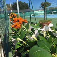 Circolo Tennis Coq D'or Andria