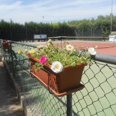 Tennis Club Monteroni